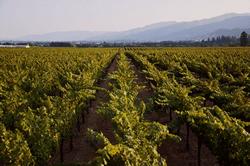 有機農法を実践した畑